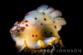 Nudibranch eating a sea hare