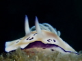 Nudibranch from Bali