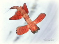 FLYING BABY