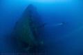 The Valfiorita Shipwreck Bow - Strait of Messina - Italy
