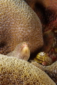 Eel peeking out of corals with Christmas Tree worms.
