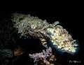 C O N N E C T E D Cuttlefish