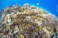 A coral reef of diversity
