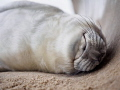 Tran·quil