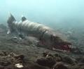 Barracuda at Liberty wreck, Tulamben.