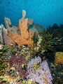Tokong, a beautiful divespot close to Sumatra.   The underwater world below 20 Meter still looks amazing but above 20 meter the 2004 Tsunami destroyed most of the life. But more than 13 years later natur recovers more and more