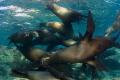 Sea Lions Family, Isla Espiritu Santo, México