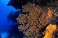 Coral in the Reef  Cozumel M xico