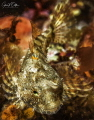 A small sculpin in cold water.