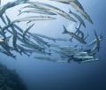 underwater life, Ustica island