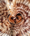 feather duster (Sabellastarte spectabilis)