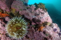 All the Monterey food groups: crab, starfish, anemone and urchin.