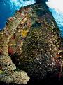 Bounty  Japanese Wreck, Amed, Bali, Indonesia