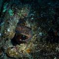 Eel on the Sea Tiger
