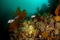 Lush Cape Town Reef - teeming with diverse marine life