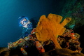 Frogfish with model