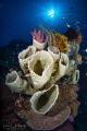 Coral Garden Bouquet-Weda Bay, Halmahera Island, Indonesia.