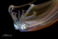 B L A Z I N G