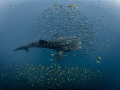Big Fish Small Fish 