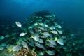 Sea Mount - Galapagos