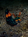 Let it Glow ... !