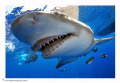 Shark picture taken on Jupiter, FL with Nikon D300-Hugyfot and (2) Inon Z-240