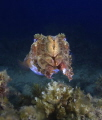 Taken at Sorrento pier, A great dive site for diversity of marine life.