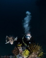 Lion fish with underwater photographer in Kapalai Dive Resort