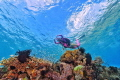 heavenly water , dive in alor indonesia, the crystal clear sea water made me feel its in heaven