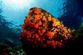 Underwater colors