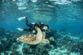 My wife and Green sea Turtle