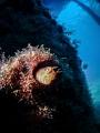 Parablennius zvonimiri.  TG5   Inon micro fisheye  Inon Z240  Retra LSD.