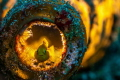 Yellow Goby in a bottle. I always liked the concept of baclighting and its effect on a subject. i do like the detail on the fins and the