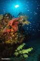 marine life - Raja ampat