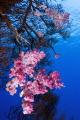 Red sea north Marine life