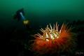 Gulen Wreck Diving