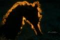 backlight story   torny seahorse