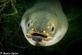 curious eel
