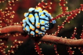 Nudibranch sits on a coral branch.