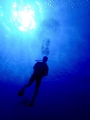 A diver makes a slow descent in the waters of the Roatan Marine Park.