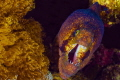 A moray eel's warning not to intrude its comfort zone