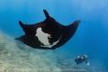 Black Manta Fenix gliding overhead for his bubble bath