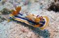Sea Slug and Emperor Shrimp