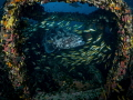 My place ... !  Malabar Grouper - Epinephelus malabaricus  Sail Rock, Thailand