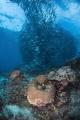 Sipadan marine life