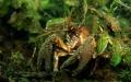 Crab Boschmolenplas Panheel