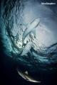 Silk sharks