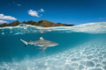 Black tip shark and the lagoon of Moorea