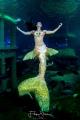 Mermaid C line @ TODI in Belgium