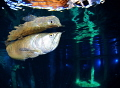 Arowana @ Todi indoor dive center